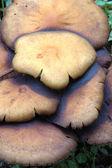 Pilze — Stockfoto