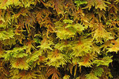 Moss Forest — Stock Photo