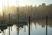 Barcos de manhã — Foto Stock
