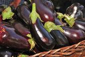 Eggplant — Stock Photo