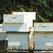 Stock Photo: Bee Box