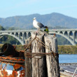 Gull Bridge — Stock Photo #26444541