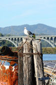 Gull Bridge — Stock Photo