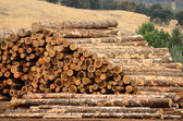 Log Yard — Stock Photo