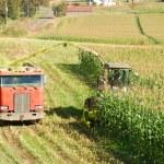 Feed Corn — Stock Photo #28837091