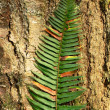 Fern on Bark — Stock Photo