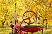秋天的颜色 — 图库照片