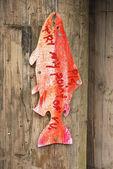 Segni di pesce — Foto Stock