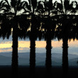 Stock Photo: Palms at Sunset