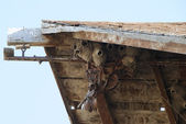 Cliff Swallow Nest — Stock Photo