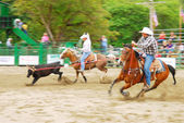 Rodeo South — Stock Photo