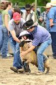 Sheep Riding — Stock Photo