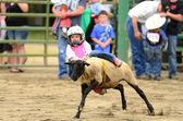 Sheep Riding — Zdjęcie stockowe