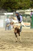 Colt Riding — Stock Photo