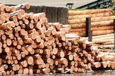 Log loader — Stockfoto