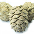 Stock Photo: Three pine cones isolated on white
