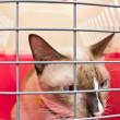 Cat carrier with cat inside. — Stock Photo