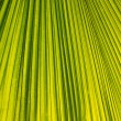 Palm leaf background. — Stock Photo