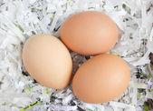 Threee eggs in shredded paper nest. — Stock Photo