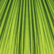 Stock Photo: Palm leaf background.