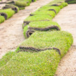 Rolls of green grass, laying in progress. — Stock Photo #32105957
