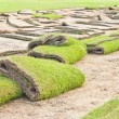 Rolls of green grass, laying in progress. — Stock Photo