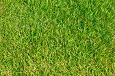 Close up of green grass of football field. — Stock Photo
