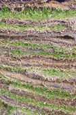 Folded of green grass sheets as layers. — Stock Photo