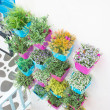 Plastic flowers with colorful plastic vase hang in row on the wa — Stock Photo