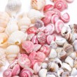 Mix three kind of sea shells. — Stock Photo