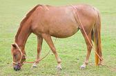 Koňské farmě. — Stock fotografie