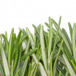 Rosemary herbal frame. — Stock Photo