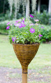 Petunia flowers with bamboo weaved pot. — Stock Photo