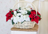 Christmas flowers with basket on the chair. — Stock Photo