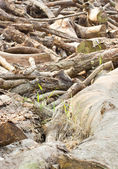 Pile of wooden logs. — Stock Photo