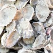 Open oyster shells with rope. — Stock Photo
