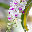 Orchid flowers. — Stock Photo
