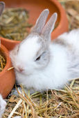 Young white bunny sitting on straw. — Stok fotoğraf