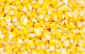 Ripe corn seed. — Stock Photo