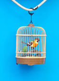 Birdcage with artificial colorful bird — Stock Photo