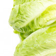 Stock Photo: Baby Cos lettuce.