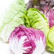 Radicchio and Baby Cos. — Stock Photo