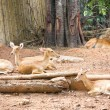 A group of deer in the zoo. — Stock Photo