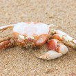 Stock Photo: Dead crab on beach.