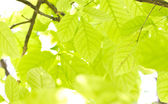Green leaves. — Stock Photo