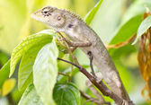 Lizard on tree. — Stock Photo