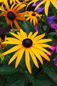 Beautiful flowers blossom — Stock Photo