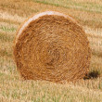 A grain field — Stock Photo #12244503