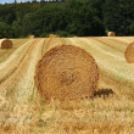A grain field — Stock Photo #12254255