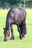 A pretty horse — Stock Photo